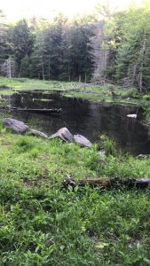 pond surrounded by forest